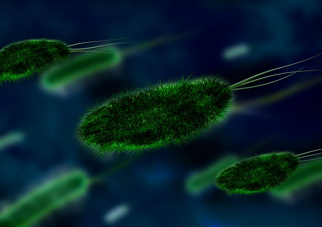 Infektionserreger Bakterien