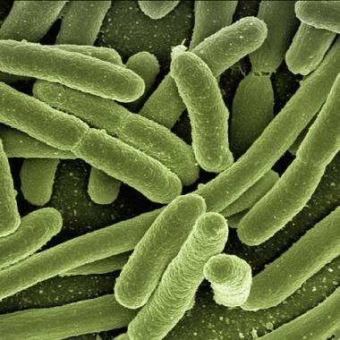 Infektion Infektionskrankheiten