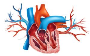Therapie einer Aortensklerose