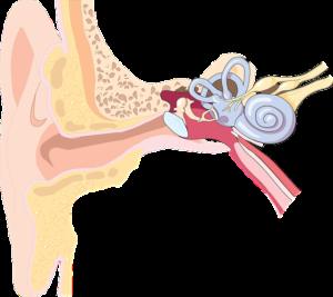 Mittelohrentzündung Dauer – wie lange Bettruhe?
