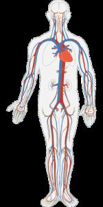 Claudicatio Intermittens – Ursachen & Therapie
