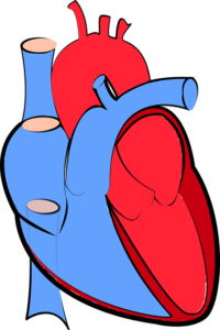 Ductus Arteriosus – eine gefährliche Erkrankung?