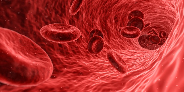 Megaloblastäre Anämie – Therapie und Behandlung