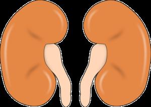 Nierengrieß – Behandlung und Therapie
