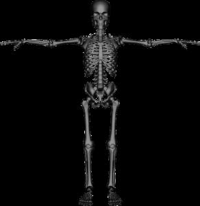 Desmale Ossifikation – Definition, Histologie und Erklärung