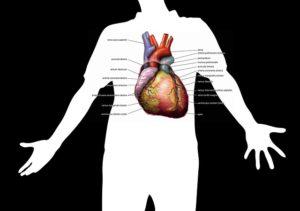 Aortenklappeninsuffizienz – Ursachen, Symptome und Therapie