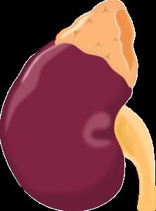 Diabetische Nephropathie – Ursachen, Symptome, Diagnose und Therapie