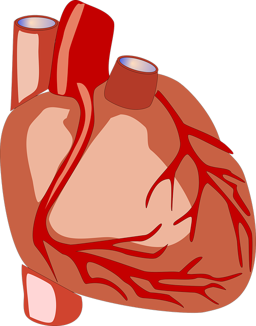 Fallot Tetralogie – Ursachen, Symptome und Lebenserwartung