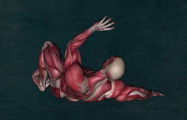 Kennmuskel – Definition, Bedeutung und mögliche Erkrankungen