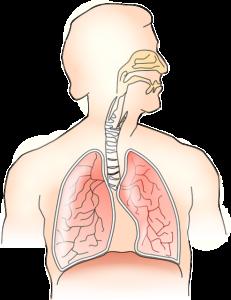 Kussmaul Atmung – Definition, Symptome und Ursachen