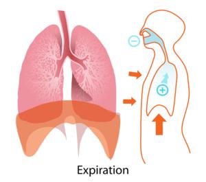 Atemzugvolumen – Definition, Aufgabe und mögliche Störungen