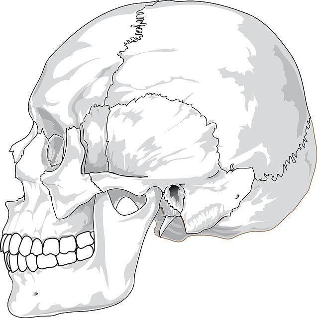 Sinus Sphenoidalis – Anatomie, Aufbau und Funktion