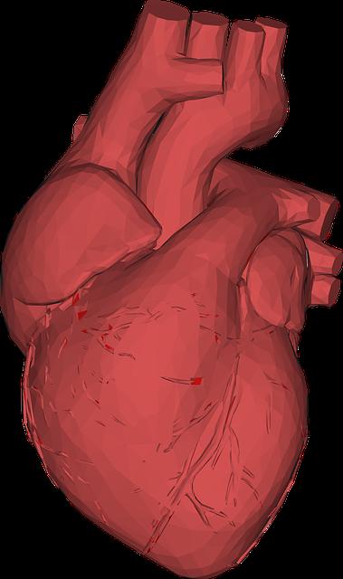 Herzohr – Definition, Anatomie und Funktion