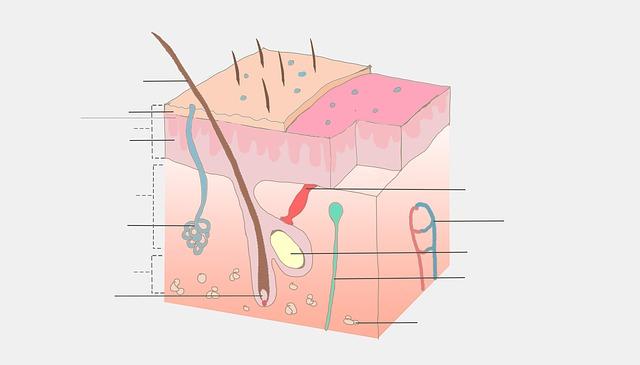 Urothel – Histologie, Aufbau und mögliche Erkrankungen