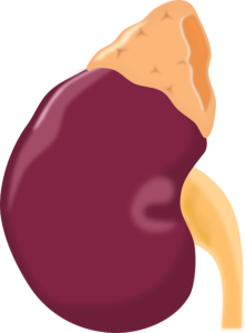 Nierenbluten – Definition, Symptome und Anzeichen