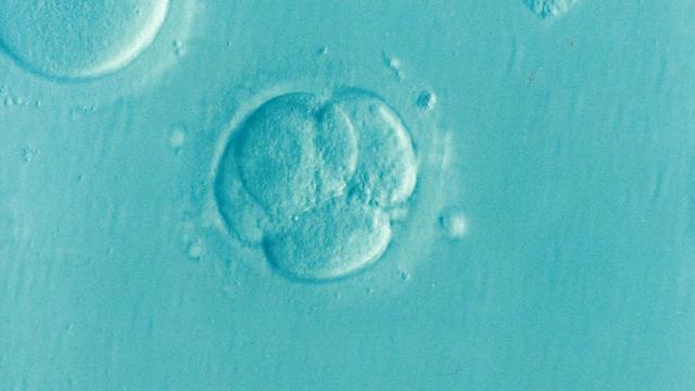 Arkadische Zwillinge – gibt es eine Behandlung?