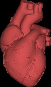 Kardiovaskulär