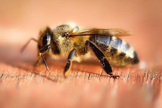 Wie behandeln Schwellung nach Wespenstich?