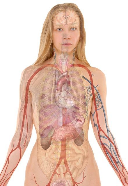 Milzriss – typische Symptome und Behandlung von Milzverletzungen