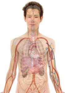 Schmerzen unter den Rippen – mögliche Ursachen und Diagnose
