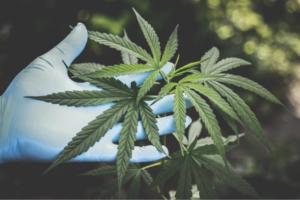 Müssen die Maßstäbe von Heilpflanzen neu überdacht werden
