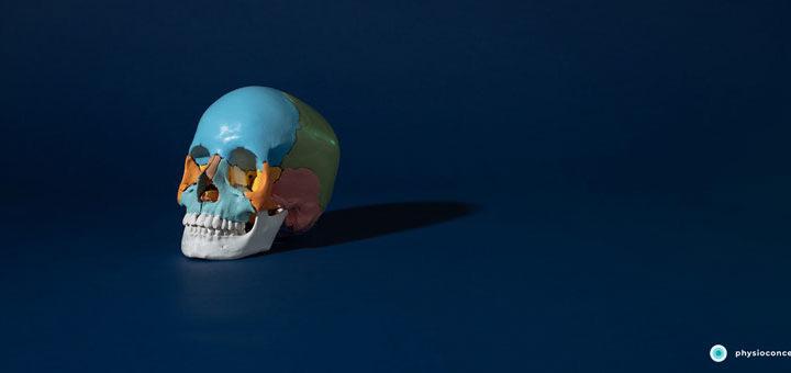 Schädel als Symbol für eine Kiefergelenkdysfunktion